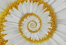 Fibonacci and Fractals