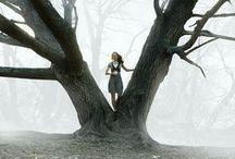 Trees / by Vicki Stafford