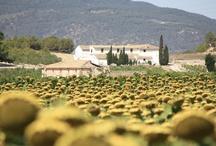 Spanish Countryside / by Spanish ThymeTraveller