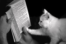 """books and cats / Welcome! This is a light hearted board about books and cats. Please do NOT post items that are not directly related to the topic of books AND cats. For our book community board and other book reelated boards see www.pinterest.com/jellybooks  *** To discover and share great books (cats not included), visit www.jellybooks.com and use the """"share"""" button to pin high resolution cover images or sample first 10%. Want an invite to pin to this board? Contact us at facebook.com/jellybooks"""