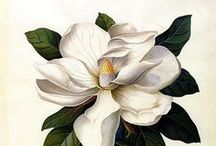 Naturally Inspired / Collection of images and pictures that show the immense beauty of plants and flowers.
