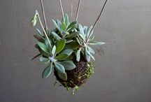 Houseplants / On this wall I collect all references of ornament styles and types of houseplants.