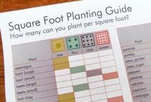 Garden Reference / Have a gardening question? Use these resources to look up the answer. / by Erin Huffstetler