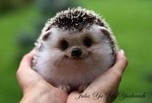 Cuteness :)