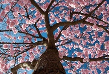 ~ Trees ~ / by Jan Henderson