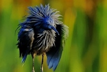~ Bird - Watching ~ / by Jan Henderson