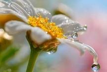 ~ Droplets ~ / by Jan Henderson