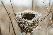 ~ Bird Cages and Nests ~ / by Jan Henderson