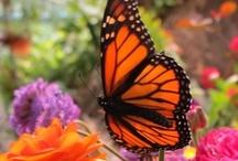 ~ Butterflies ~ / by Jan Henderson
