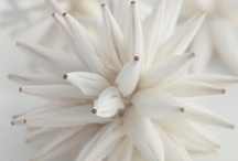 ~ White and Wonderful ~ / by Jan Henderson