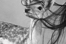 furries / by kerstin williams