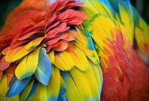 parrots / by Sarah Cesler