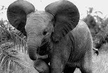 Elephants on Parade / Elephants