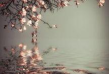 reflections/spejlinger
