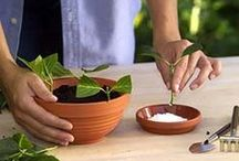 Don't Procrastinate, Propagate / You want more plants in your yard?  We'll help you grow them.