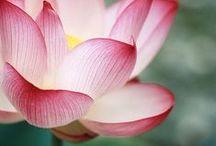 delicious flowers / sooo pretty