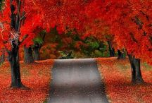 Fall / by Erica Wright