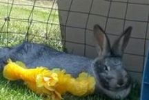 Backyard Breeding & Farming / All the critters here have a great life! We love them and have fun with keeping them happy!