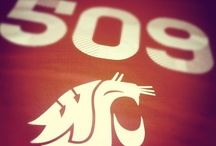 Go Cougs! / WSU & Kappa Delta / by Britney Martin