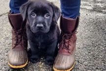 pups.  / by carly haiduk
