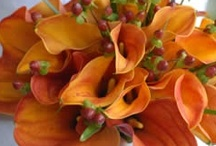 Fall wedding flowers / by Caroline Whitmore