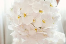 White Wedding Flowers / by Caroline Whitmore
