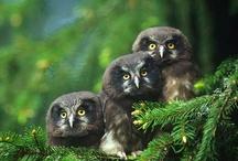 Owls! / by Emily Scherer