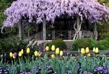 Gardening - My Love of FLOWERS / by Michelle Alderman