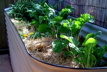Dog-Proof Garden / And grass hopper-proof too