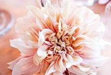 .. Blush Florals .. / Blush wedding flowers are all the trend this season! / by Botanica Events