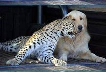 Friend is Friend