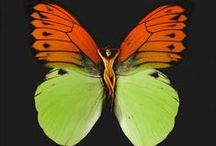 b u t t e r f l y / butterflies are free and colourful ... so are we