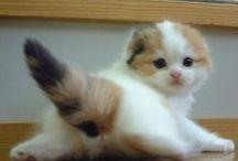 ♥Hello Kitty♥ / Cats / by Mi Furusawa