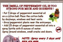 DIY Pest and Bug Repellents / All natural recipes to keep pest at bay without the use of toxic chemicals.
