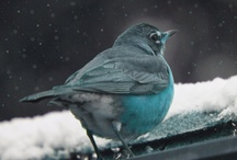 Birds  / I love birds