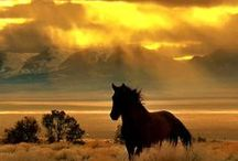 beauty, grace, power...the horse / by Christina Carder