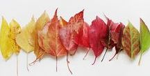 Fall ♡ / Halloween and Thanksgiving ~ All Fall