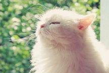[Meow Time]