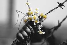Bloom. / by Ainara Blancas