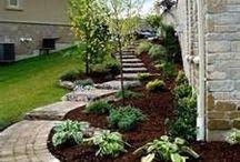 Garden tips & hints