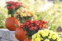 Holidays | Fall / by Tammi E