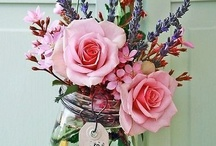 Blomme / Urban Rose
