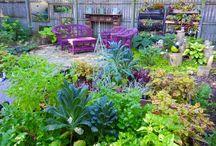 Garden Love / by Eileen DeMars