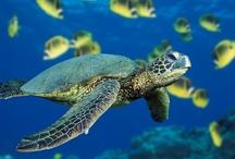 Under the Sea Safari