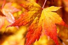 Autumn / Beautiful autumn pictures ❈ Thank you for following me!! ❈