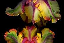 Fleurs / Beautiful flowers and gardening stuff / by Melissa MacPherson
