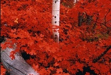 Amazing colors:red - vörös / ❈ Thank you for following me!! ❈