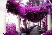 Amazing colors - purple - lila / ❈ Thank you for following me!! ❈