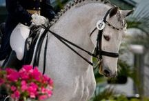 Beautiful animals, of our planet: the horses / ❈ Thank you for following me!! ❈