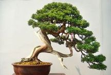 Special crops - the Bonsai / ❈ Thank you for following me!! ❈